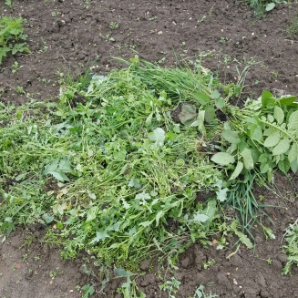 A brand new weed heap, all from that little patch
